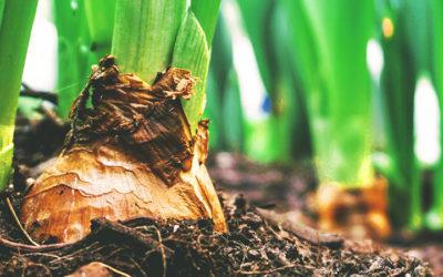 Mei: tuinonderhoud